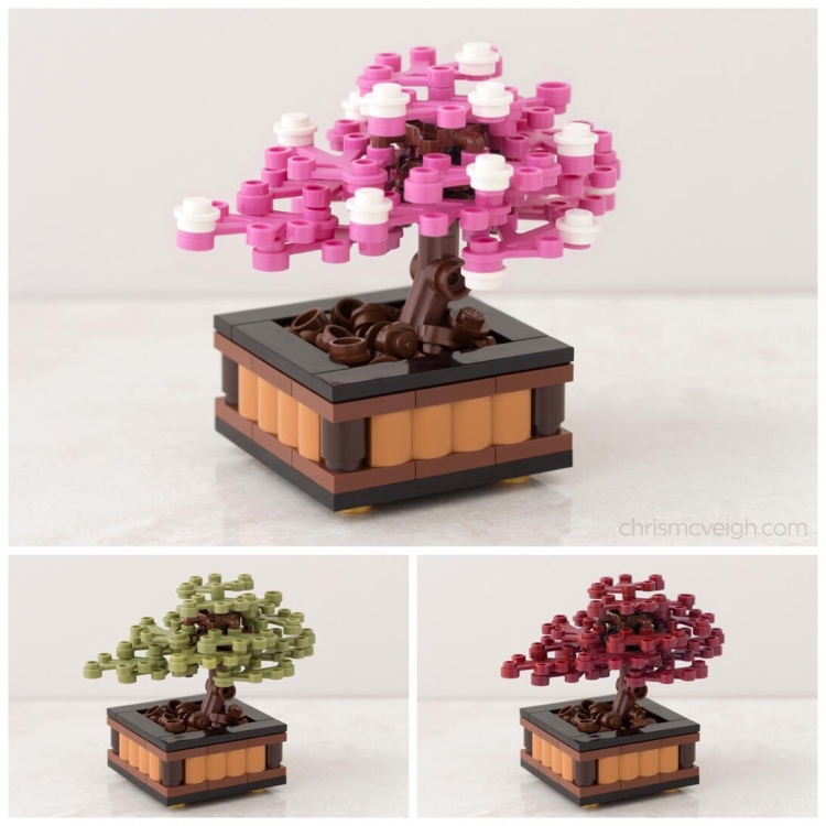 Image of Chris McVeigh Bonsai Cherry Blossom Tree